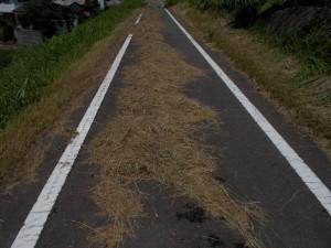 道に放置された草